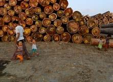 TIMBER TROUBLE IN MYANMAR