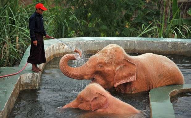 WHITE ELEPHANTS IN NAY PYI DAW, MYANMAR