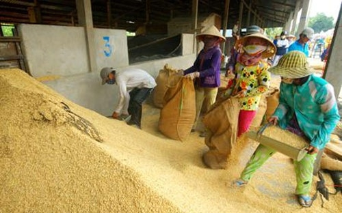 Rice exports to EU fall as Myanmar's jumps