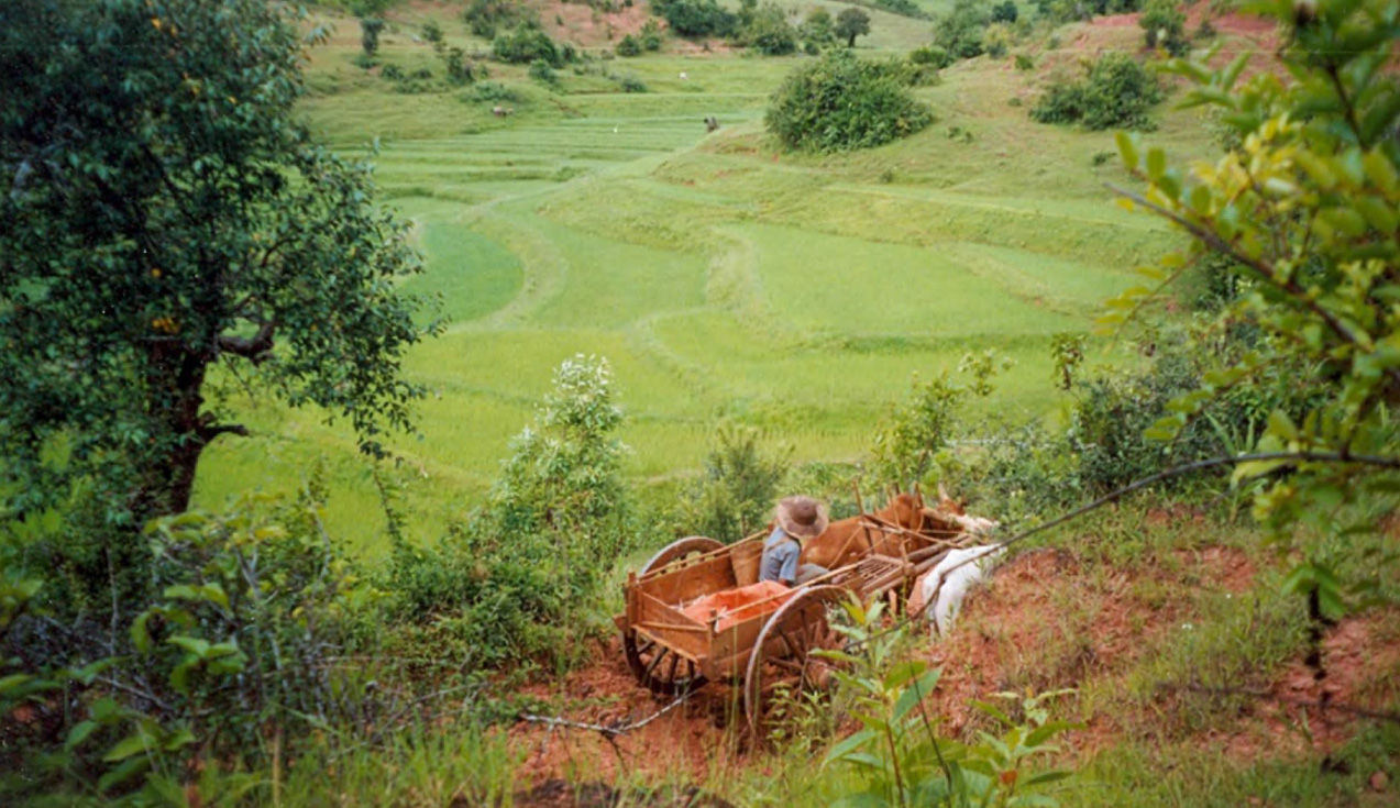 PADDY FIELDS IN SHAN STATE, MYANMAR