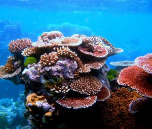 Coral Structures Abounding Myeik Archipelago