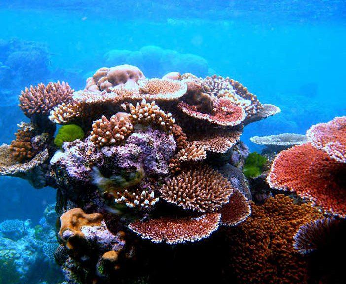 Coral Structures Abounding Myeik Archipelago