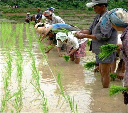 Israel Supports Myanmar in Agriculture